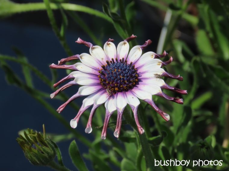 flower_petals_nursery_named_byron_bay_sept 2019