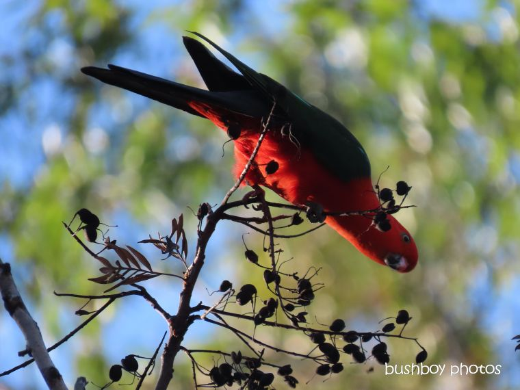 king_parrot_garden_named_home_jackadgery_sept 2019