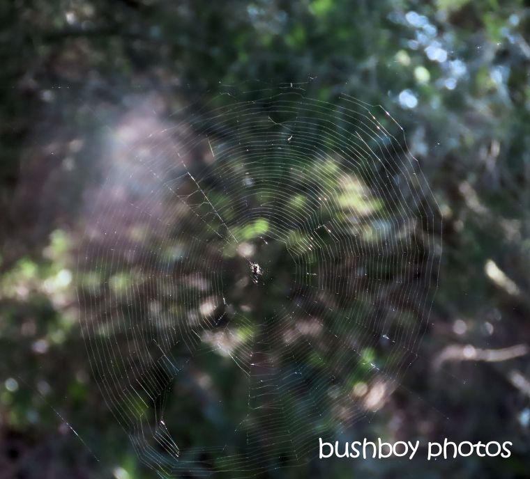 spider_web_small_named_caniaba_sept 2019