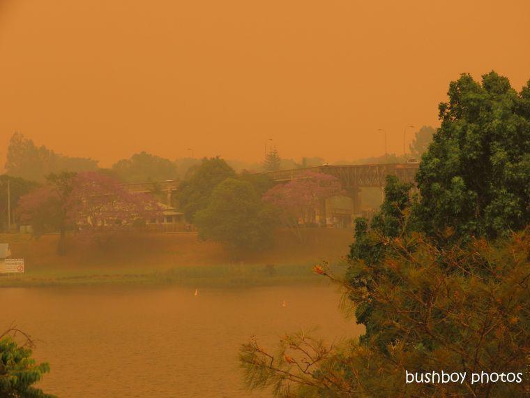 191109_blog_challenge_six_word_saturday_fire_clarence river_grafton_jacaranda_tree