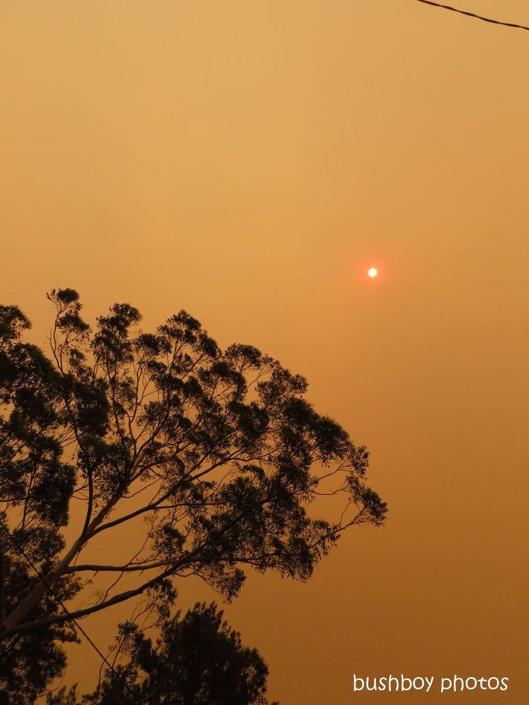 191109_blog_challenge_six_word_saturday_fire_sun_tree