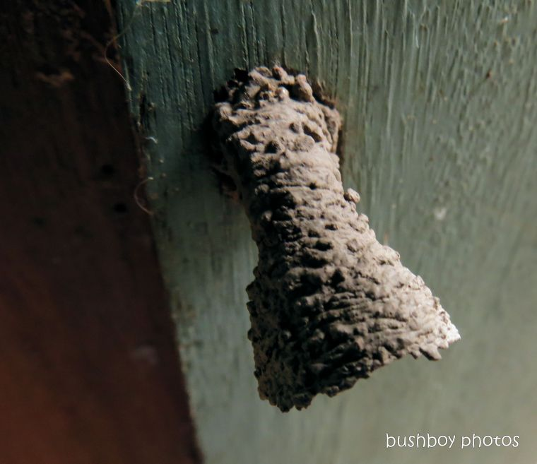 191115_blog_challenge_architect_wasp_nest1