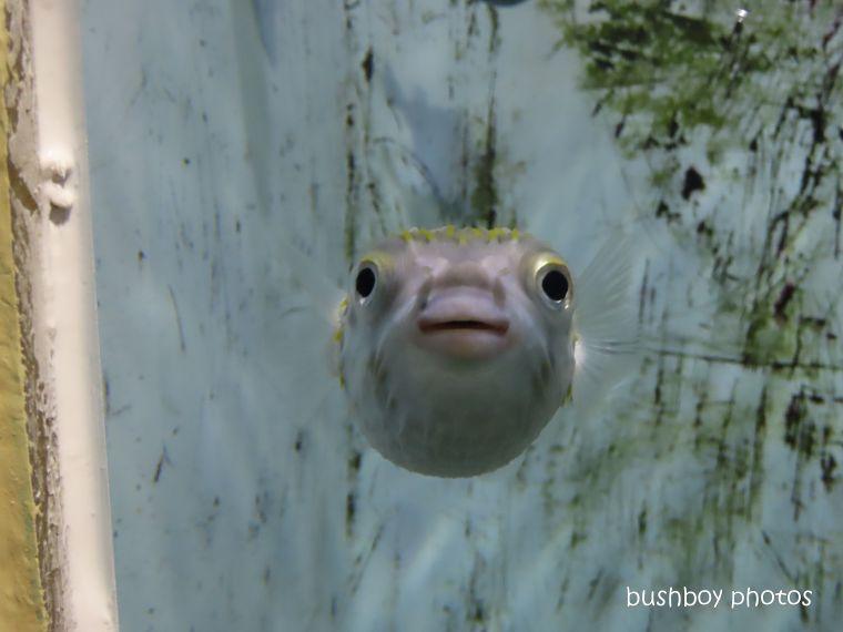 fish_bob_named_aquarium_tasmania_oct 2019