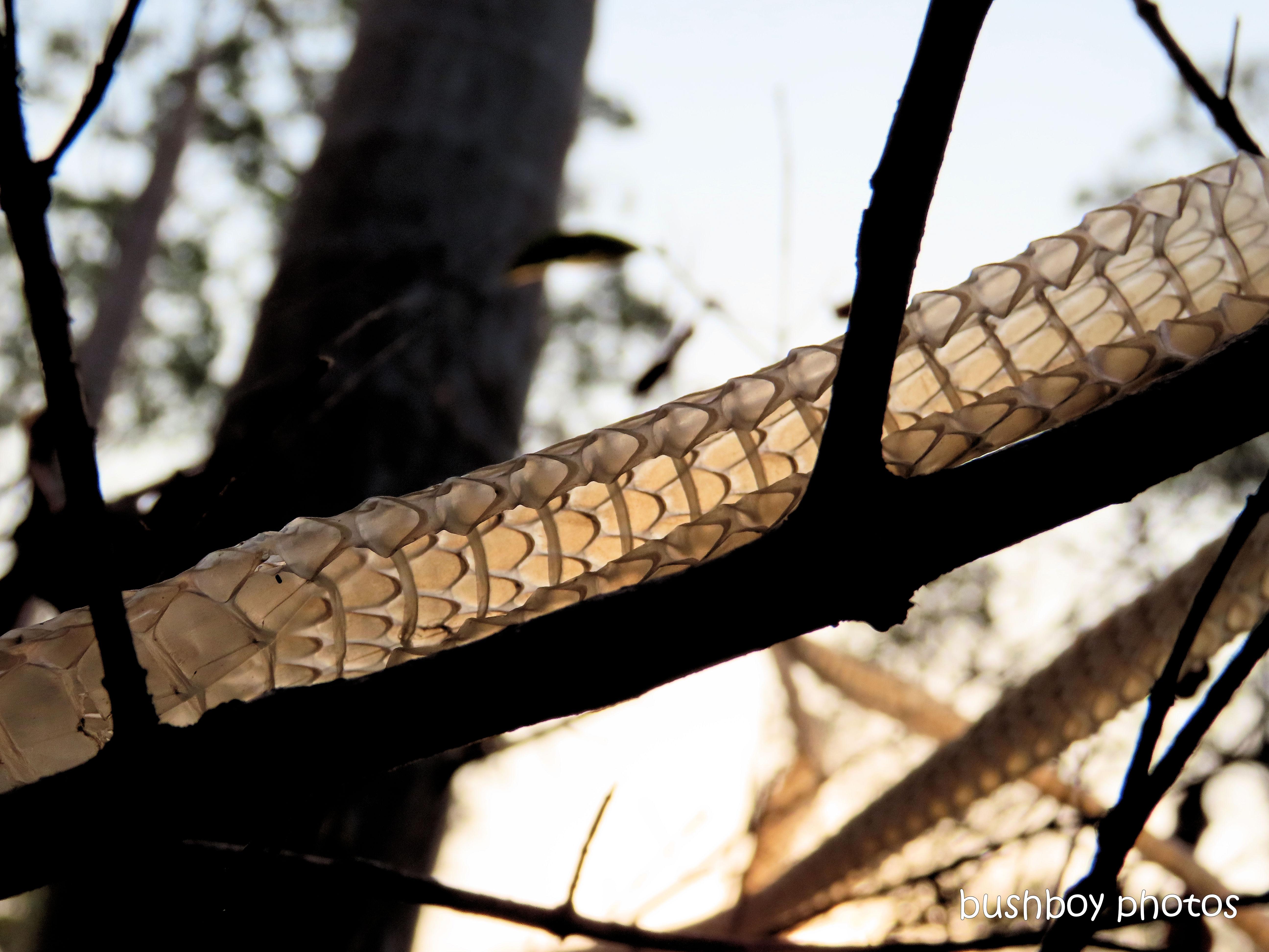 green_tree_snake_skin3_named_home_jackadgery_nov 2019