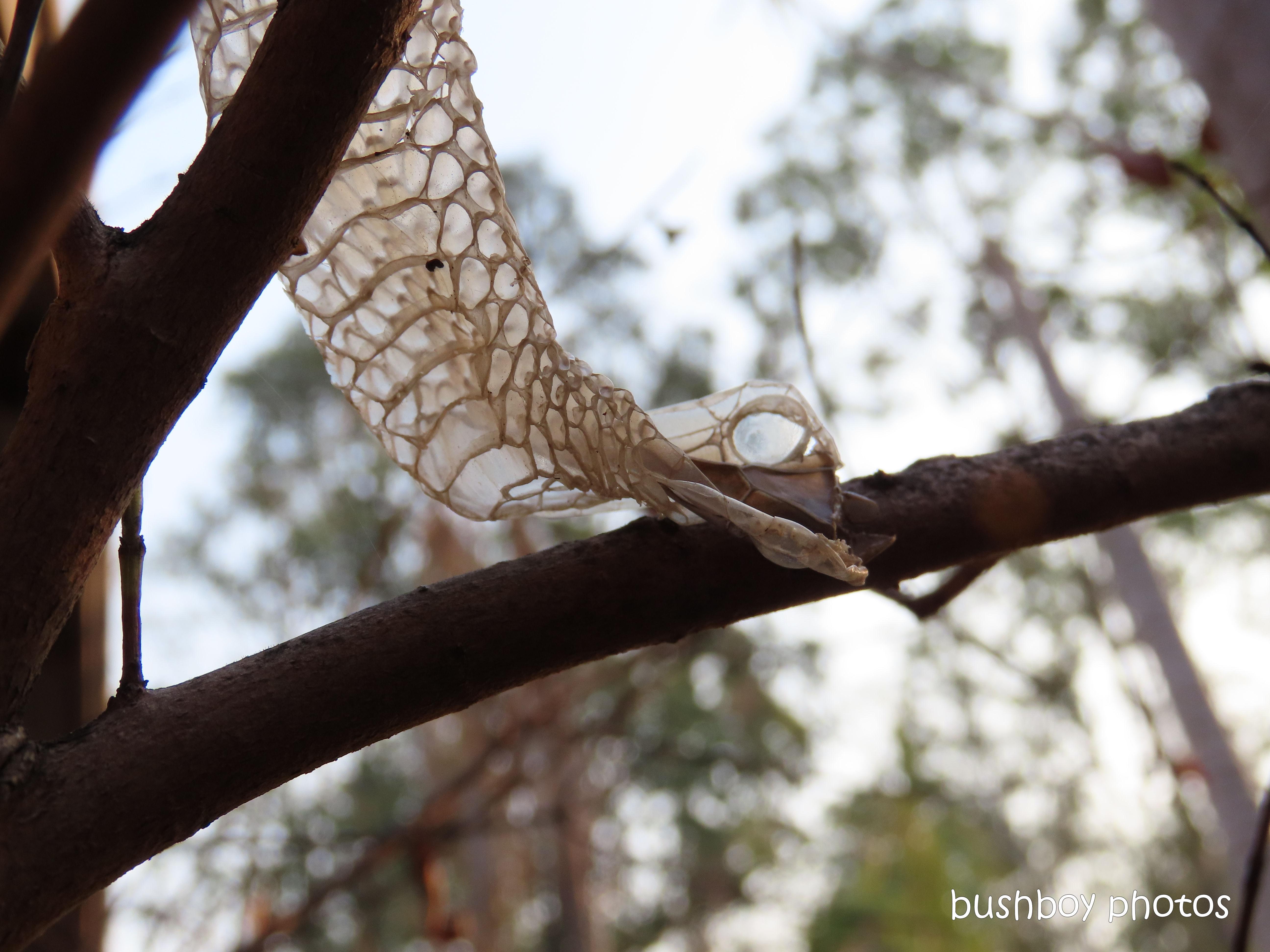 green_tree_snake_skin_head_named_home_jackadgery_nov 2019