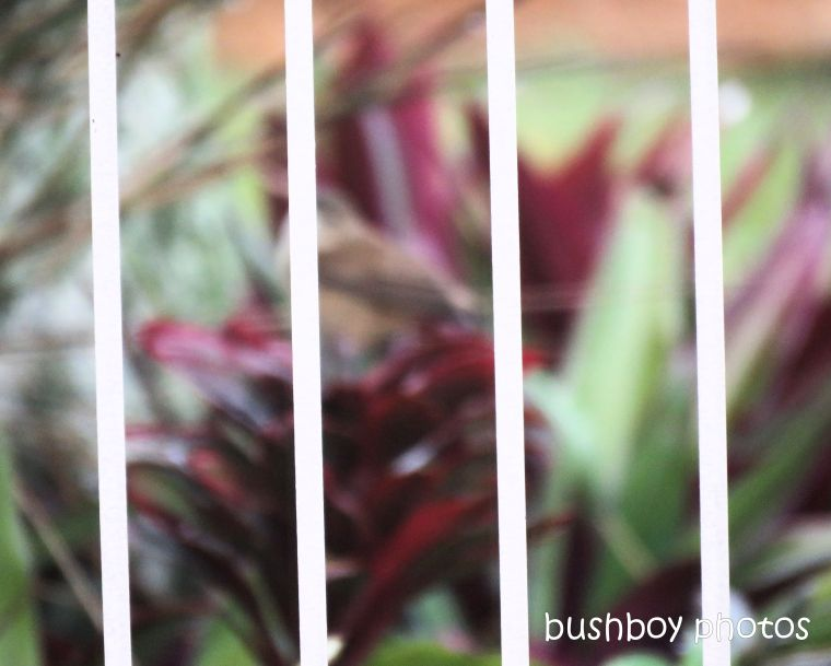 191203_blog_challenge_abstract_fence_garden_red