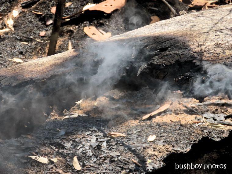 191214_blog_challenge_six_word_saturday_smoke_log_fire