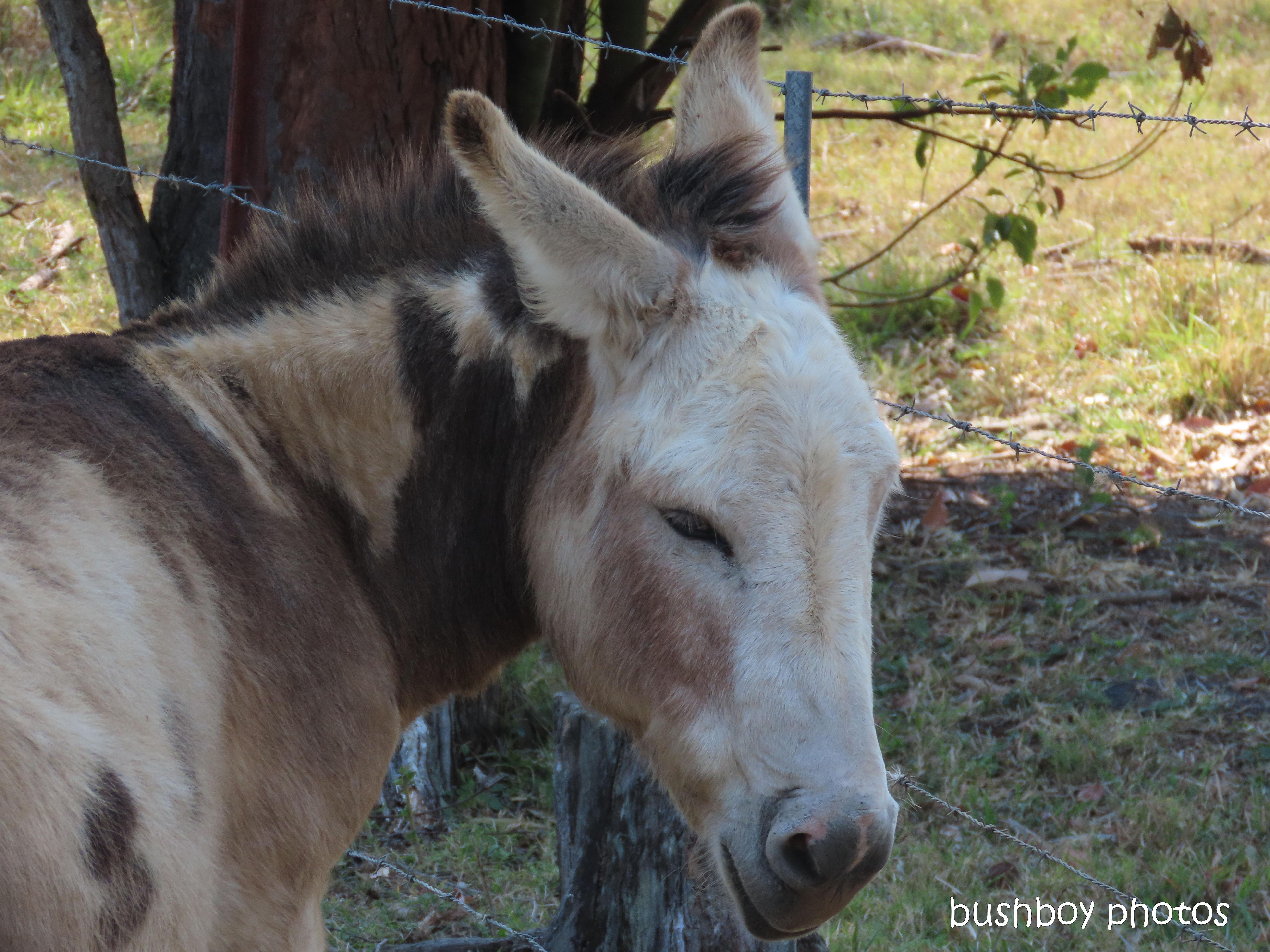191218_blog_challenge_quote_donkey
