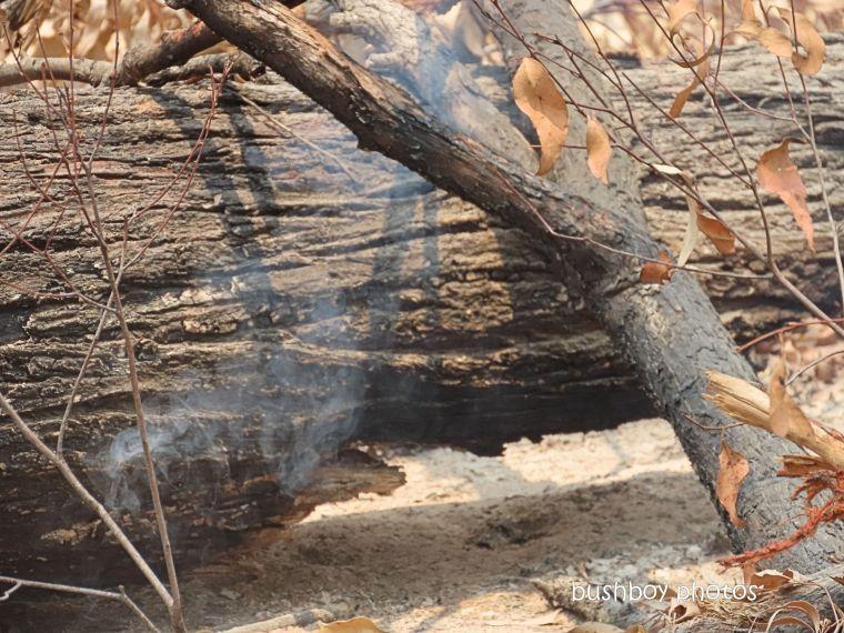 191221_blog_challenge_six_word_saturday_smoke_log_fire2