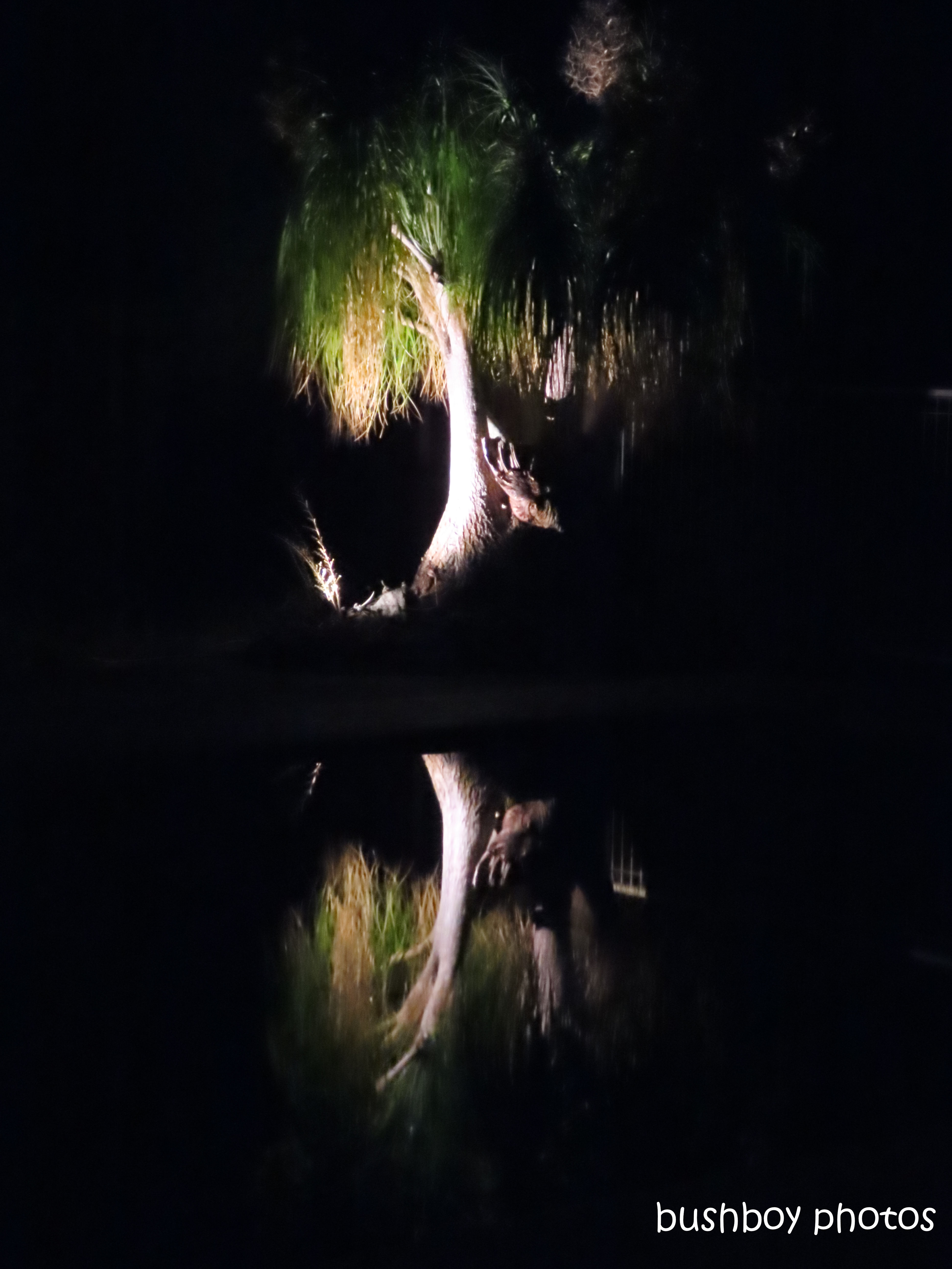 191227_blog_challenge_reflection_pool_caniaba_ponytail palm