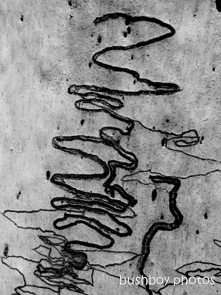 191229_blog_challenge_blackandwhite_squiggly_lines_scribbly gum_tree