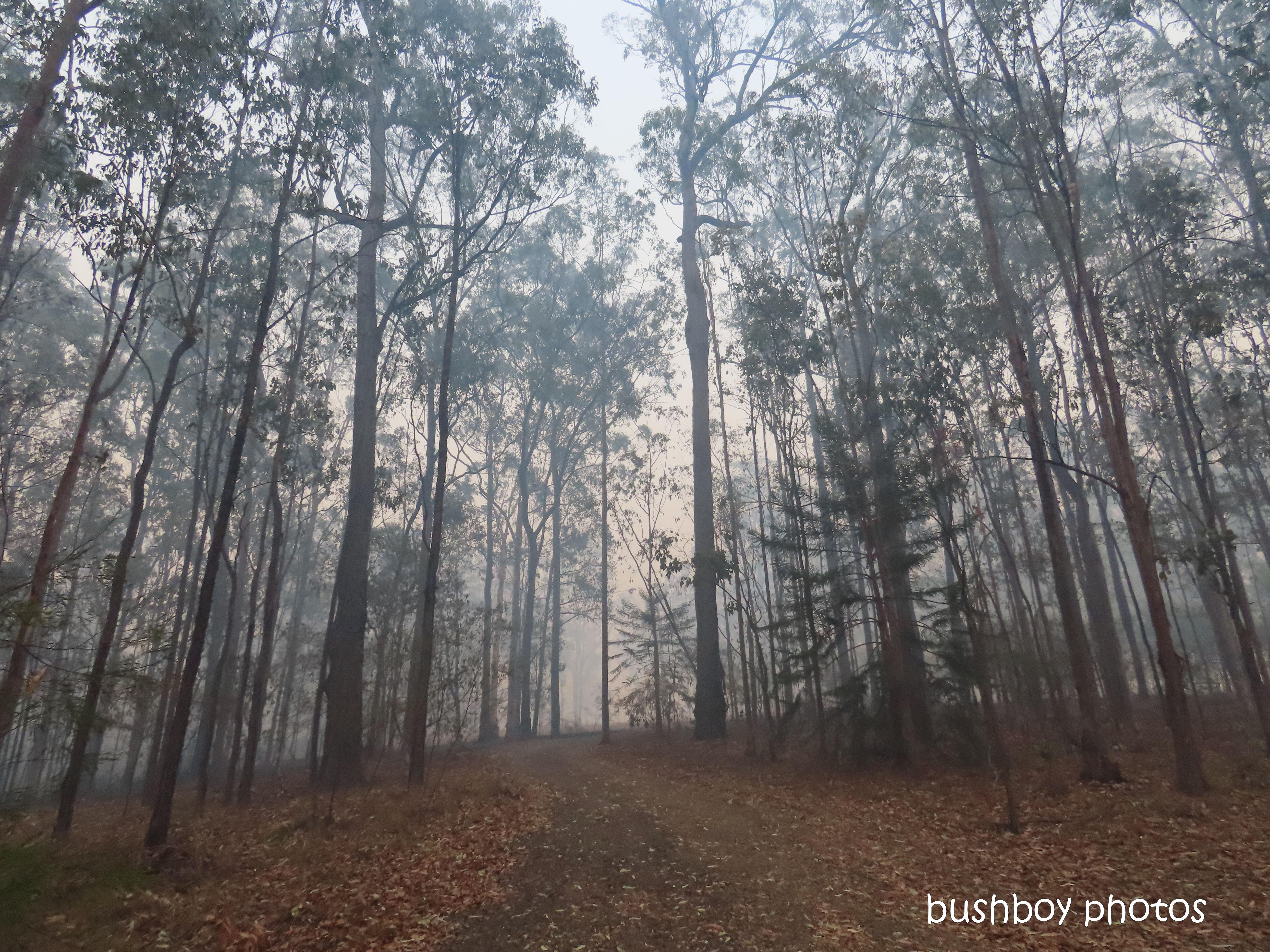 driveway_smoke_durranbah_blog_fire_post_dec 2019