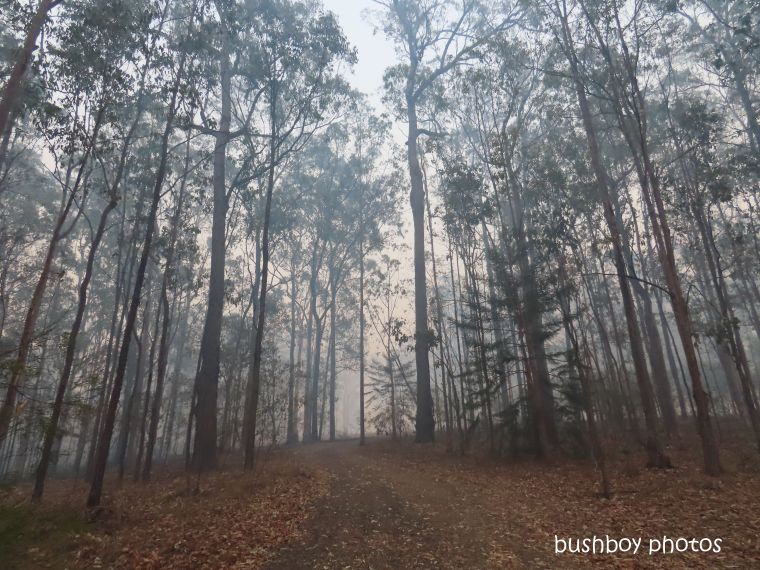 driveway_smoke_durranbah_blog_fire_post_dec 2019