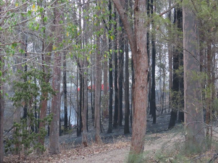 fire truck_trees_durranbah_blog_fire_post_dec 2019