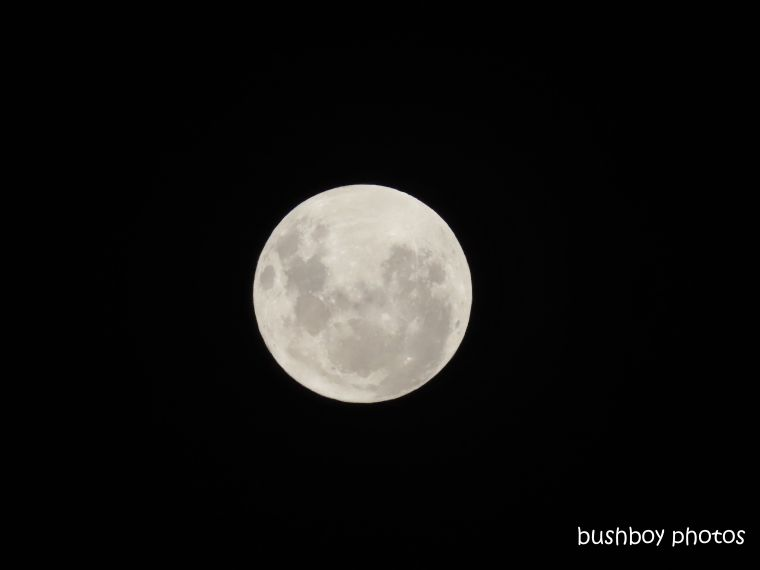 full moon_named_home_jackadgery_nov 2019