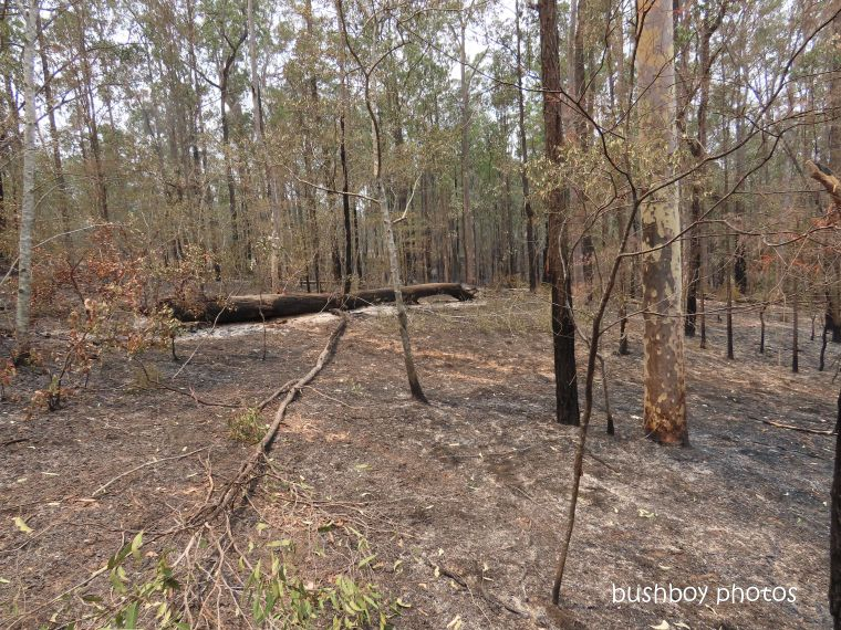 ironbark log_burning_durranbah_blog_fire_post_dec 2019