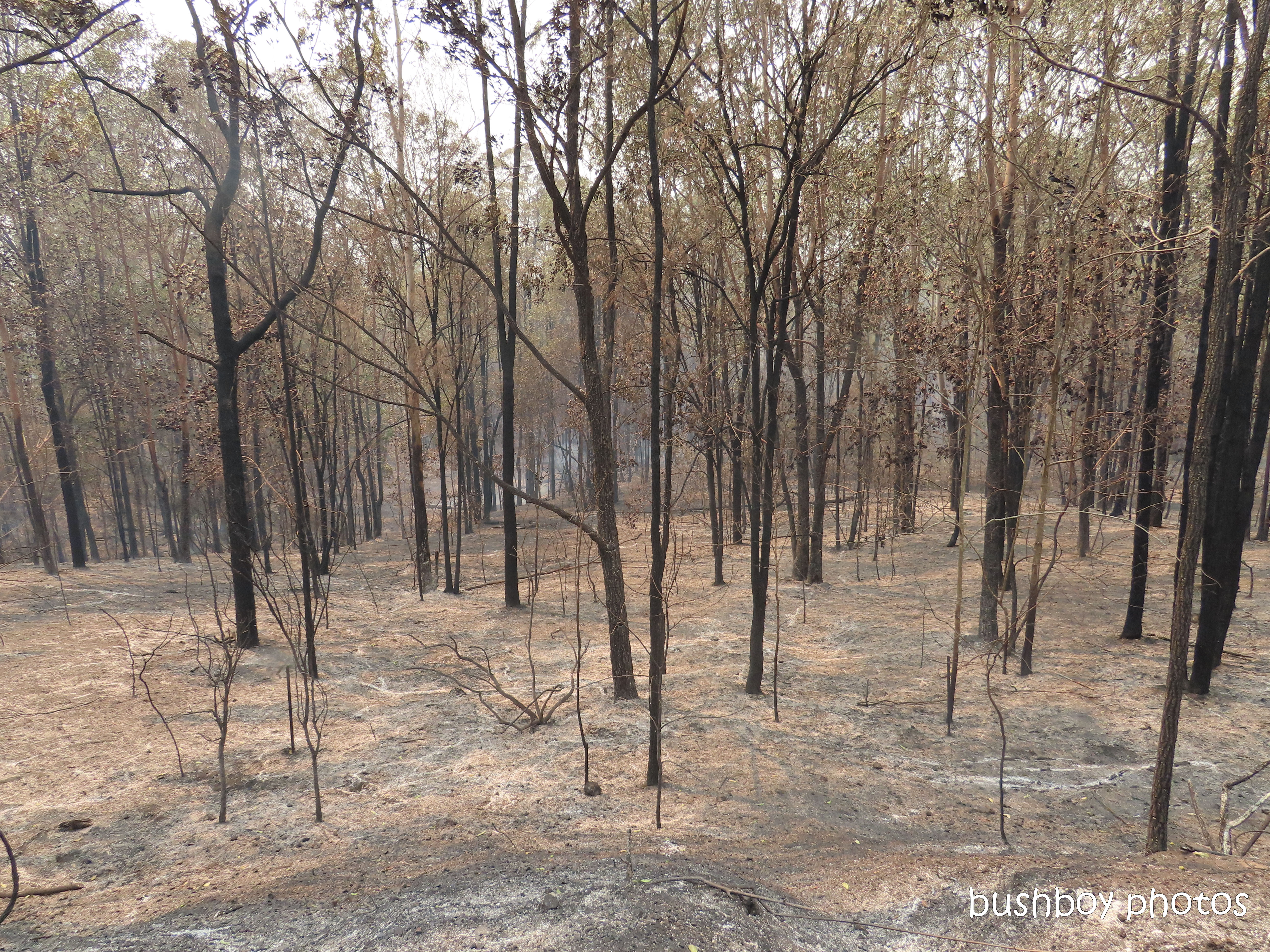 property_view1_durranbah_blog_fire_post_dec 2019