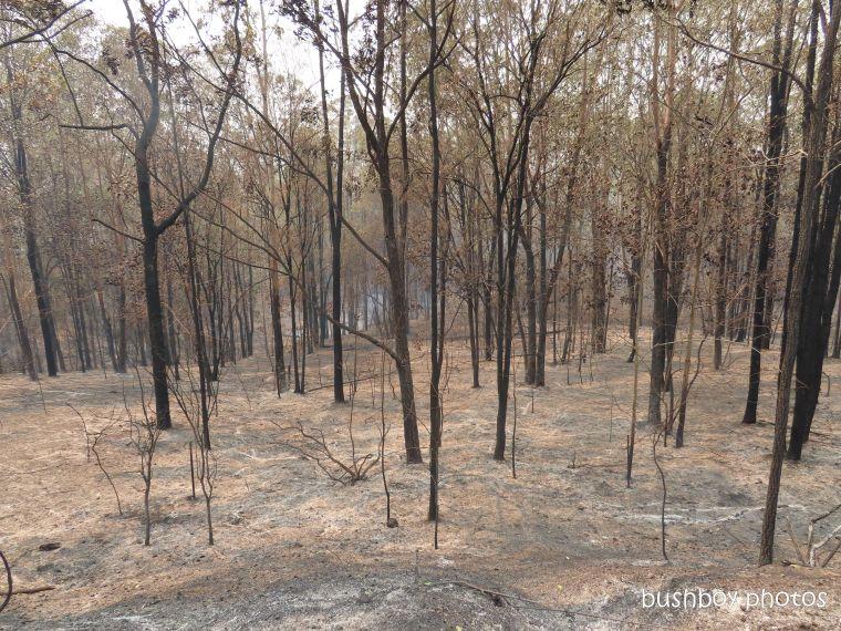 property_view1_durranbah_blog_fire_post_dec 2019