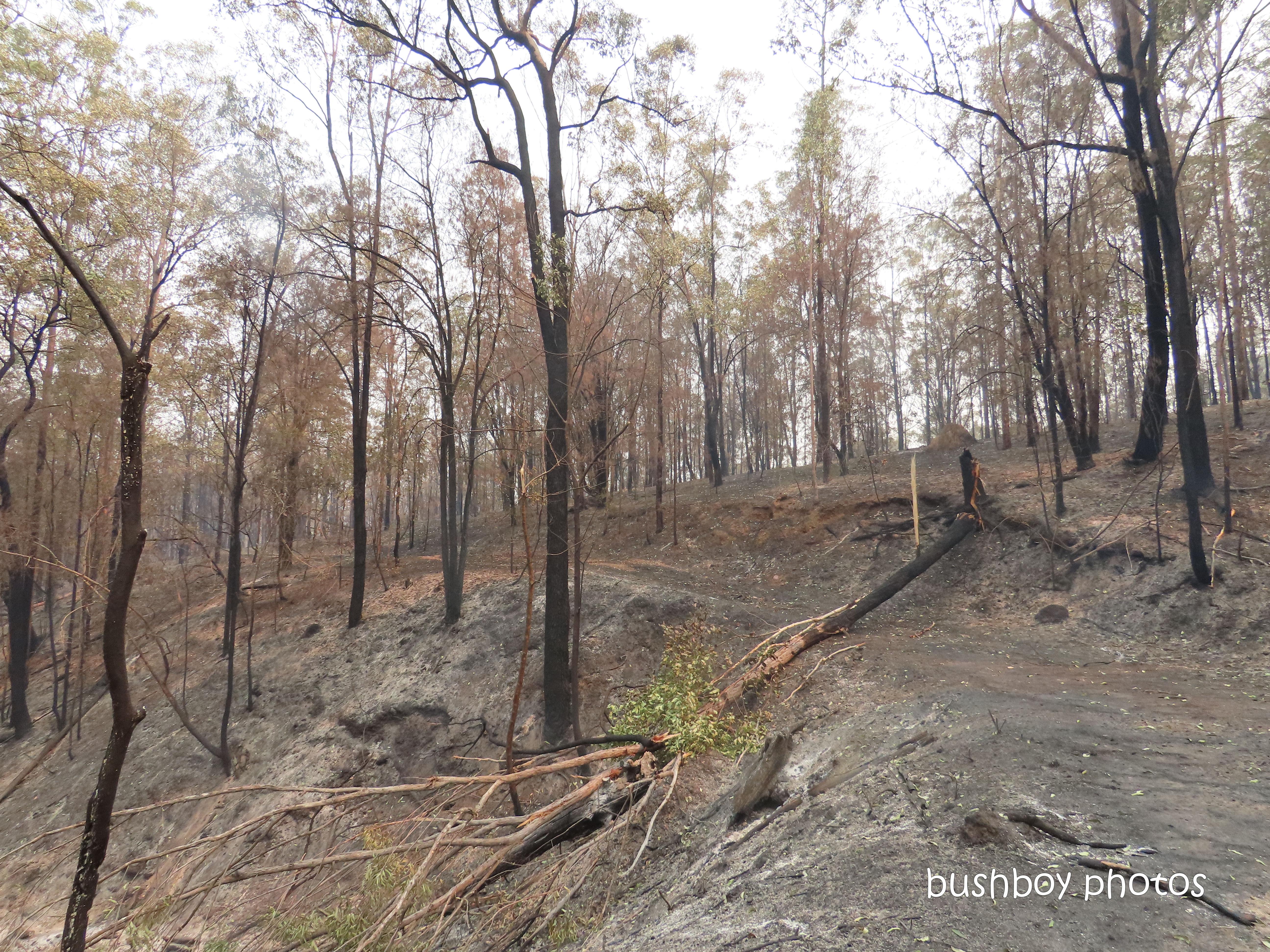 property_view2_fallen tree_track_durranbah_blog_fire_post_dec 2019