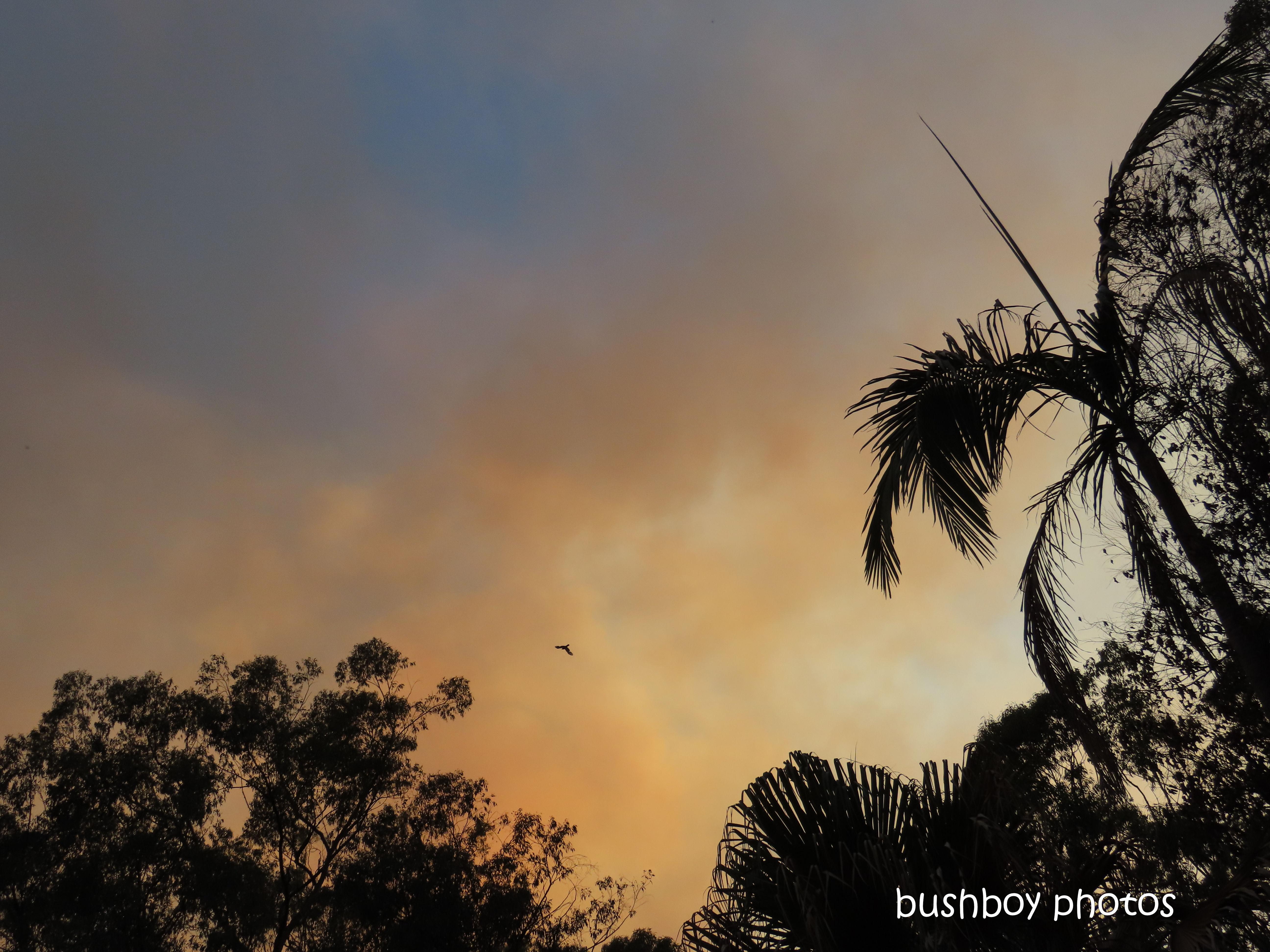 smoke_sky_durranbah_blog_fire_post_dec 2019