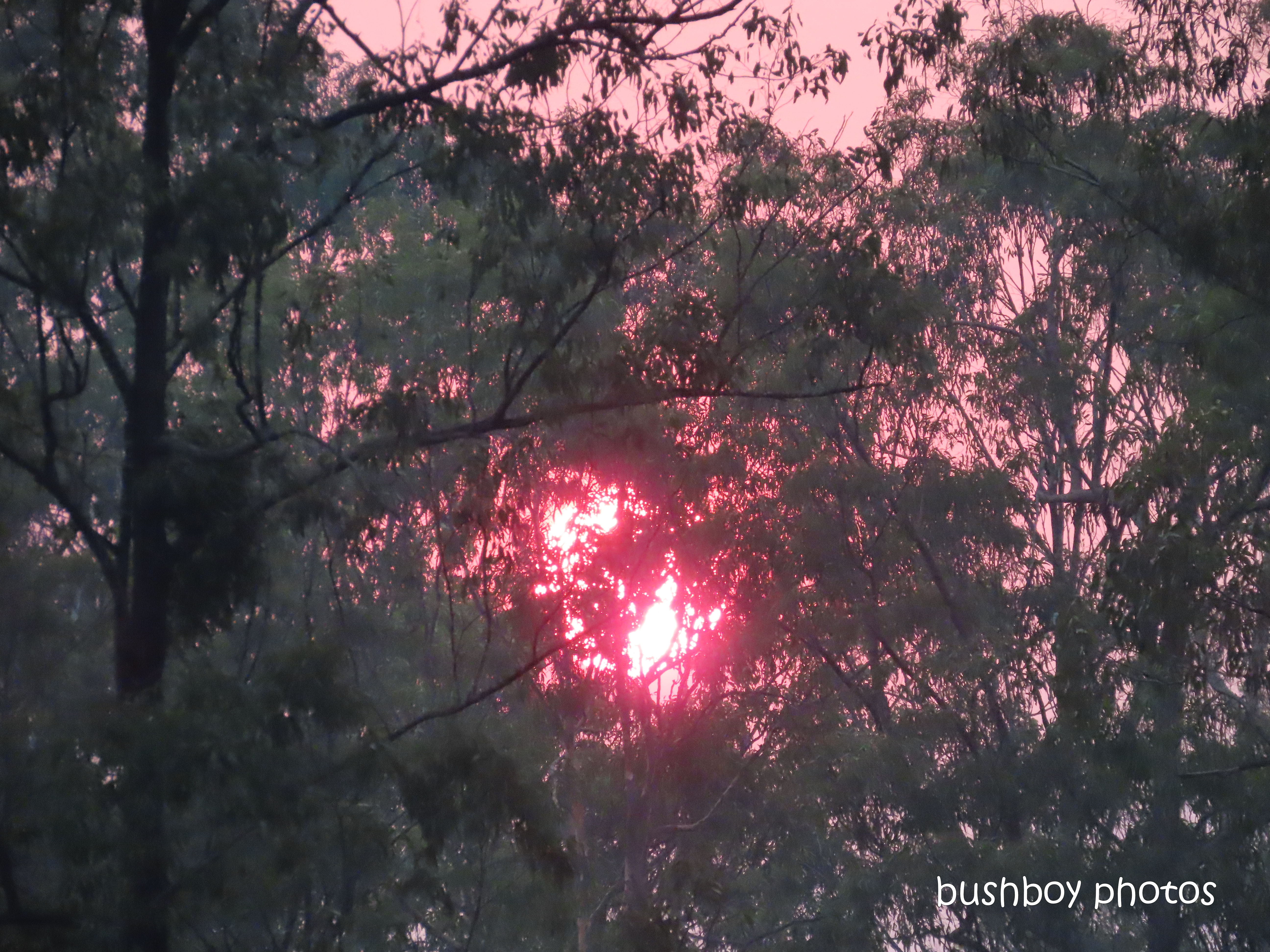 sunset_red_trees_durranbah_blog_fire_post_dec 2019