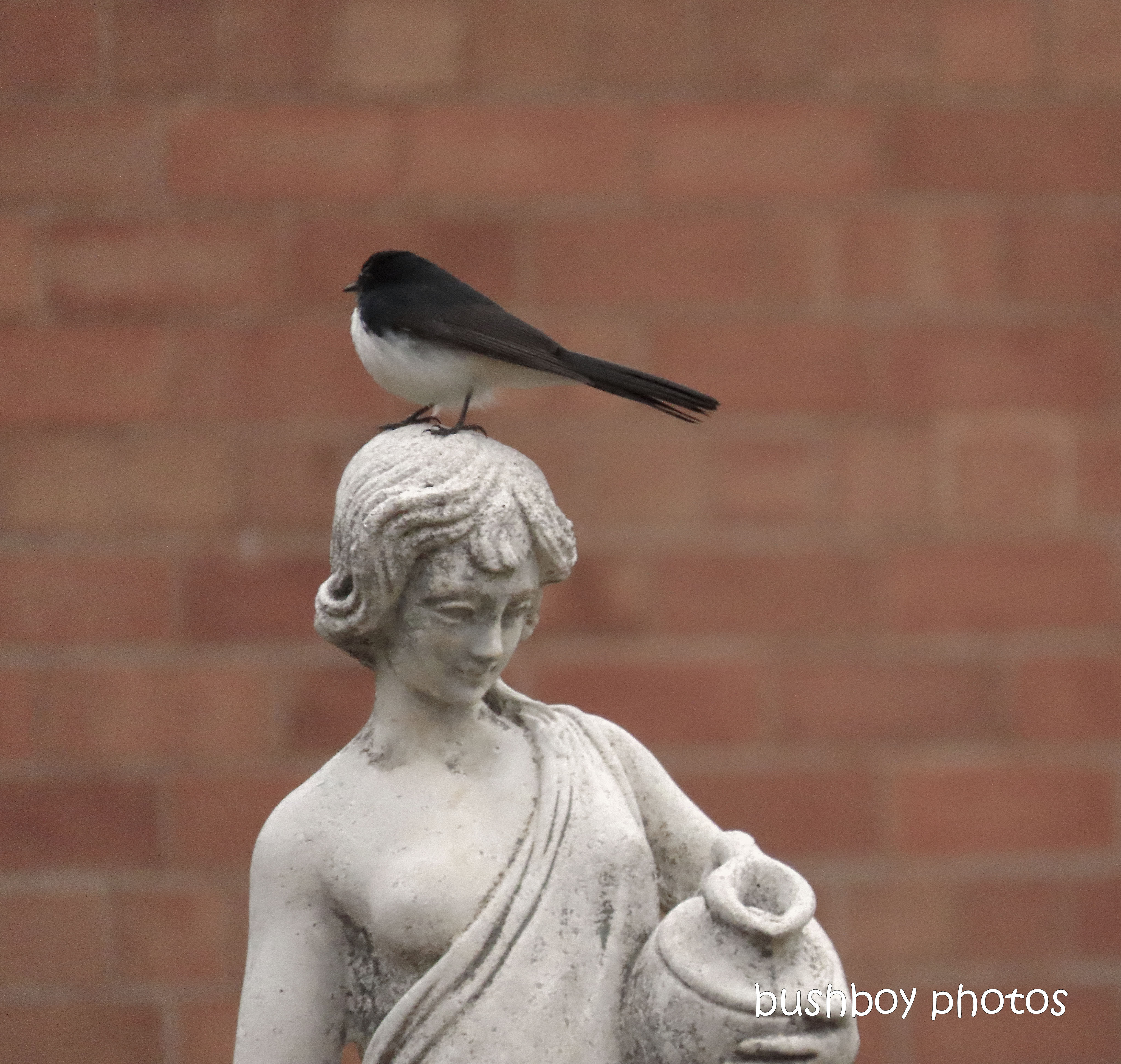 20200105_blog challenge_silent sunday_statue_willie wagtail_head