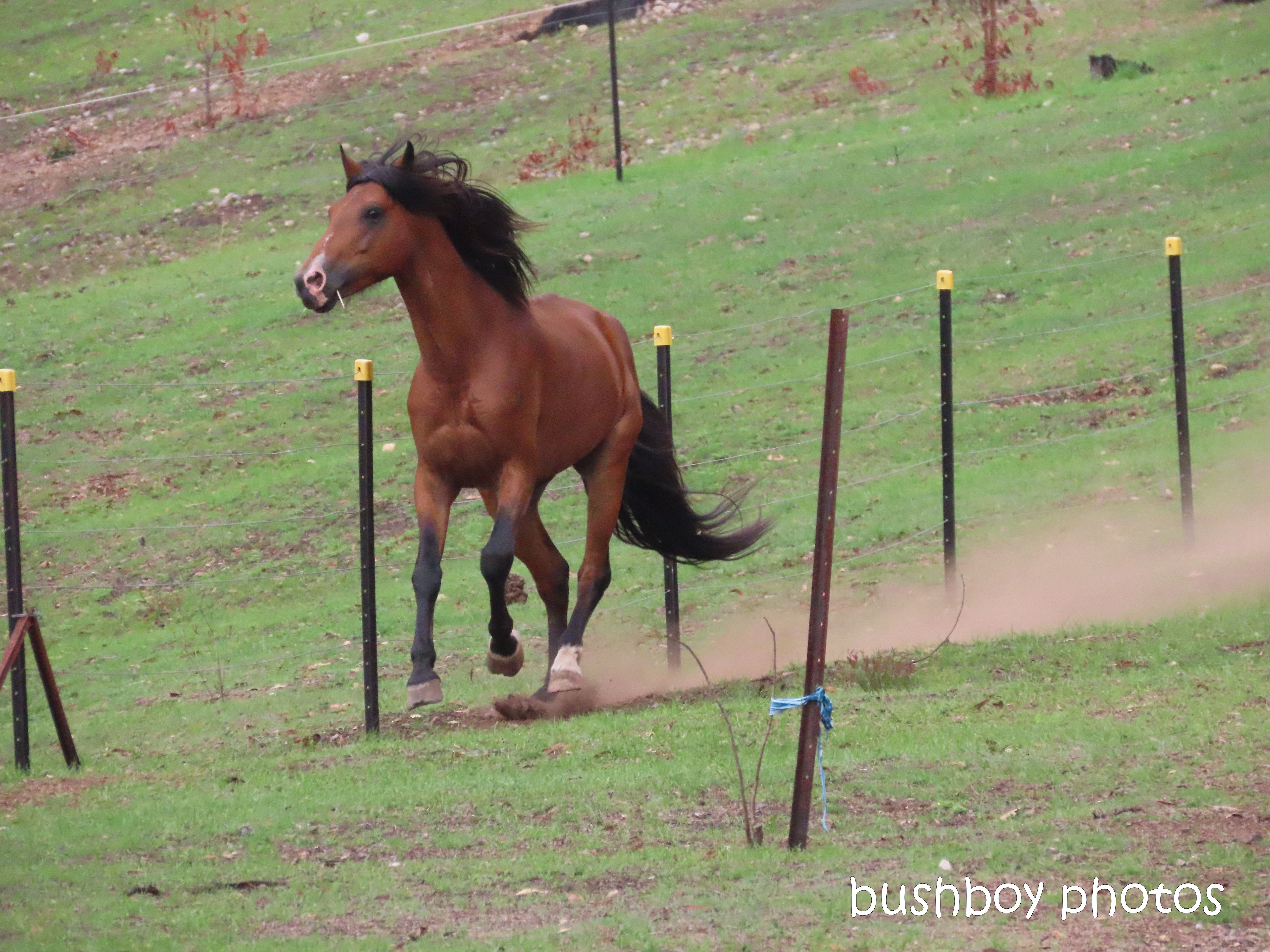 20200112_blog challenge_action_horse_gallop_jackadgery