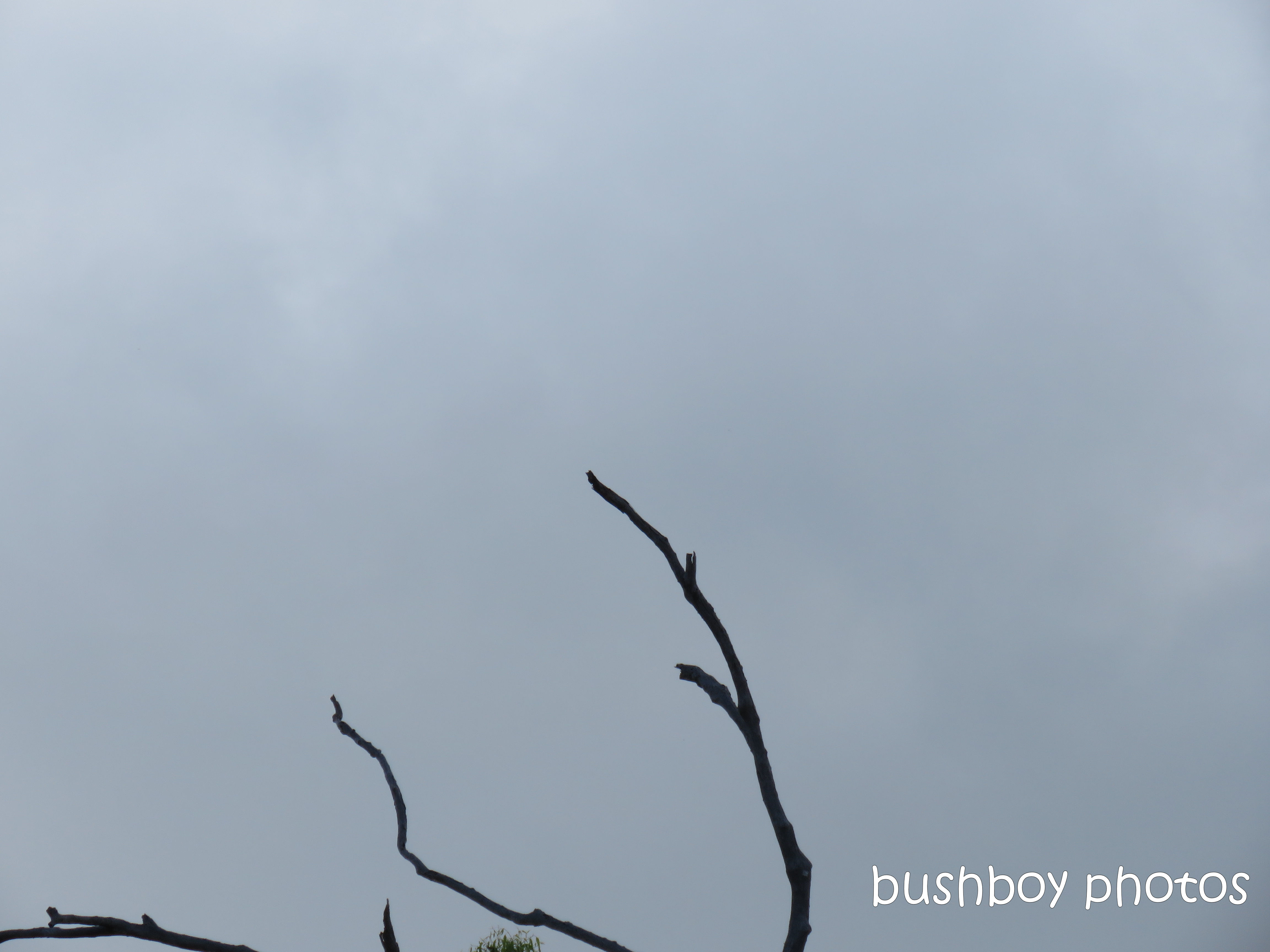 20200122_blog_challenge_tree_sky_minimalism