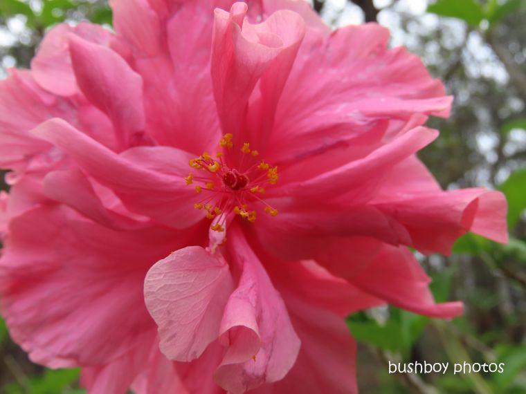 20200127_blog challenge_macro_hibiscus flower