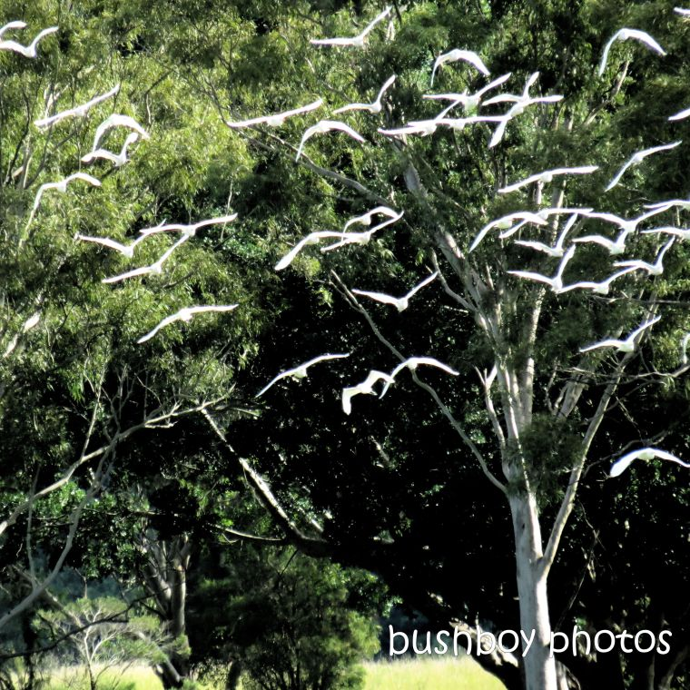 202001_blog challenge_light_flight_egrets