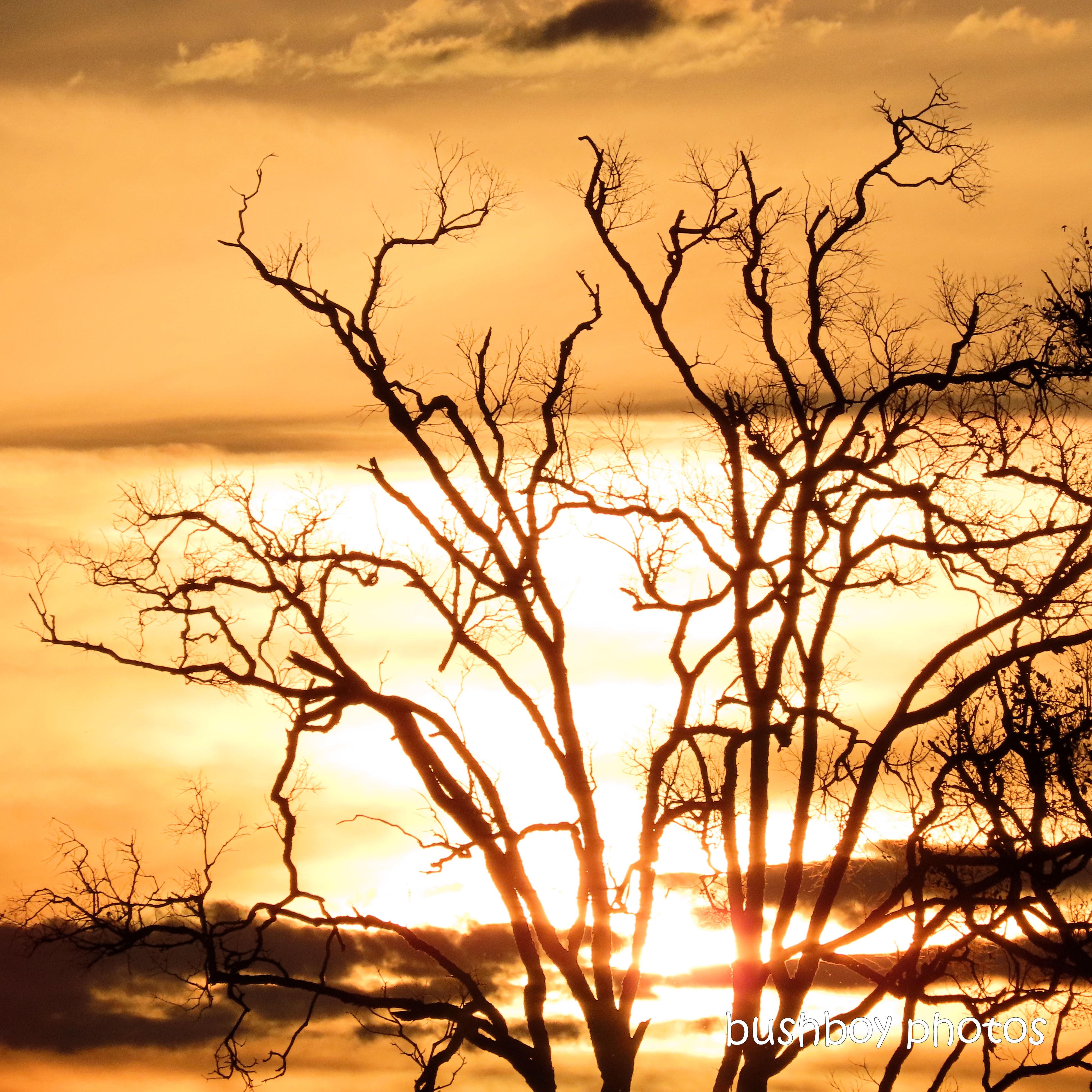 202001_blog challenge_light_sunset_tree
