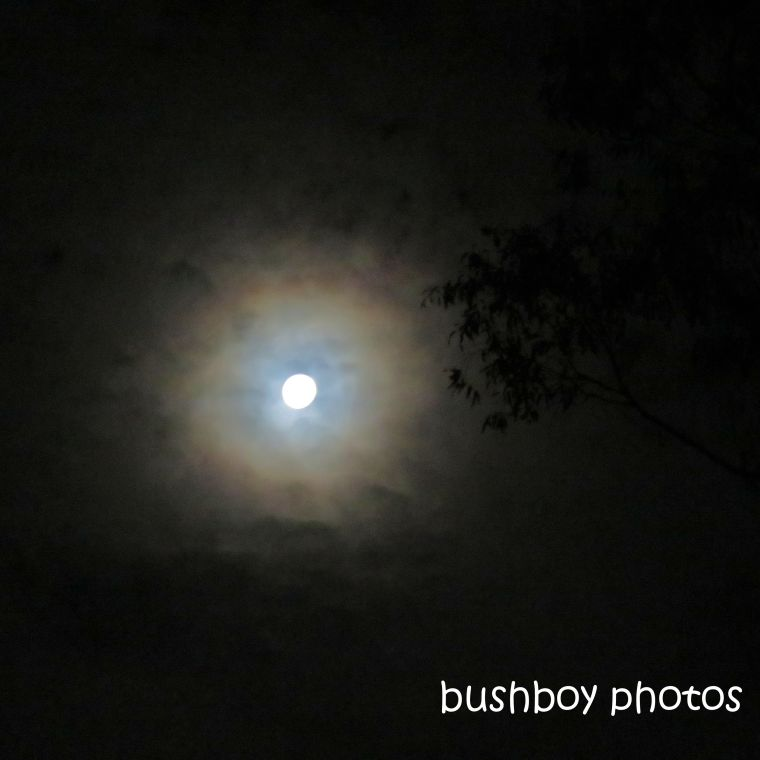 2020103_blog challenge_light_moon