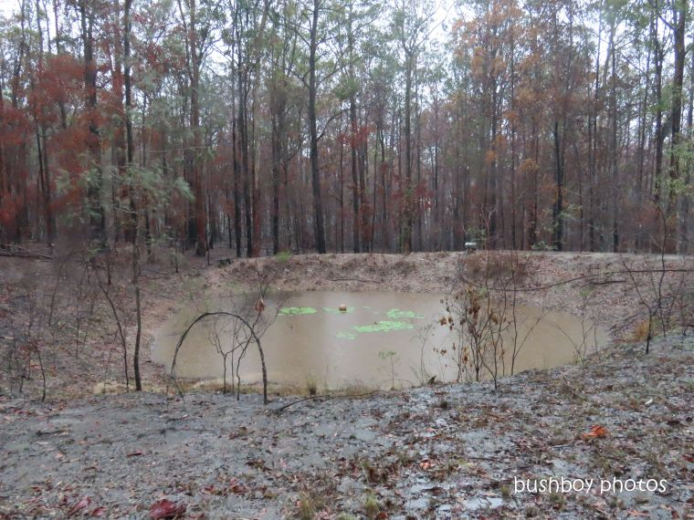 dam_filling_water_named_home_jackadgery_jan 2020