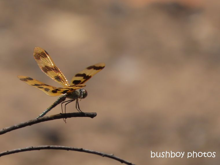 dragonfly_dam_home_jackadgery_jan 2020