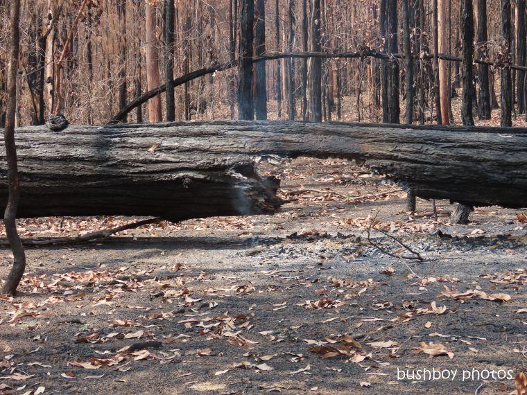 log_burning_ironbark_burnt_fire_home_jackadgery_jan 2020