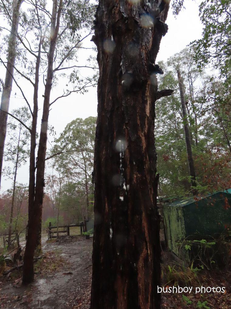 tree_foam_named_home_jackadgery_jan 2020