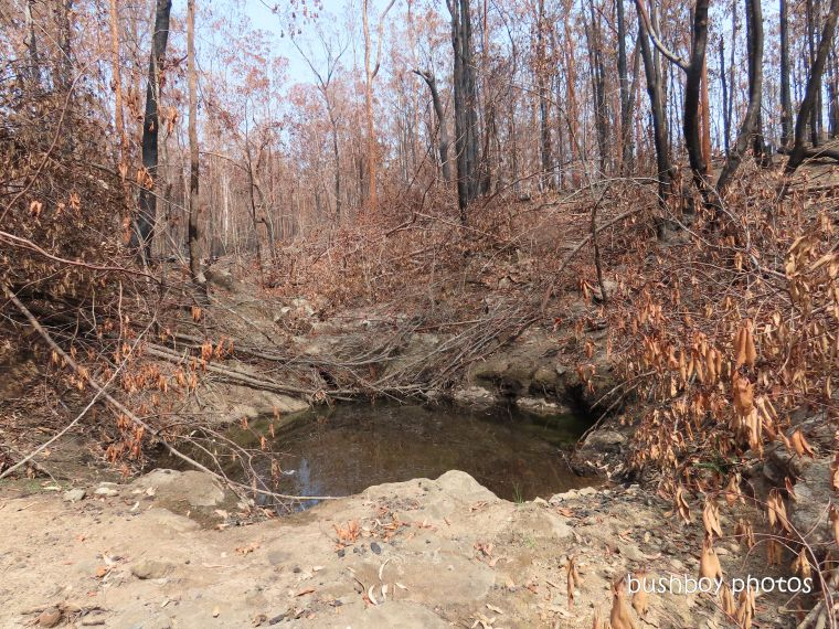 waterhole_trees_water_burnt_fire_home_jackadgery_jan 2020