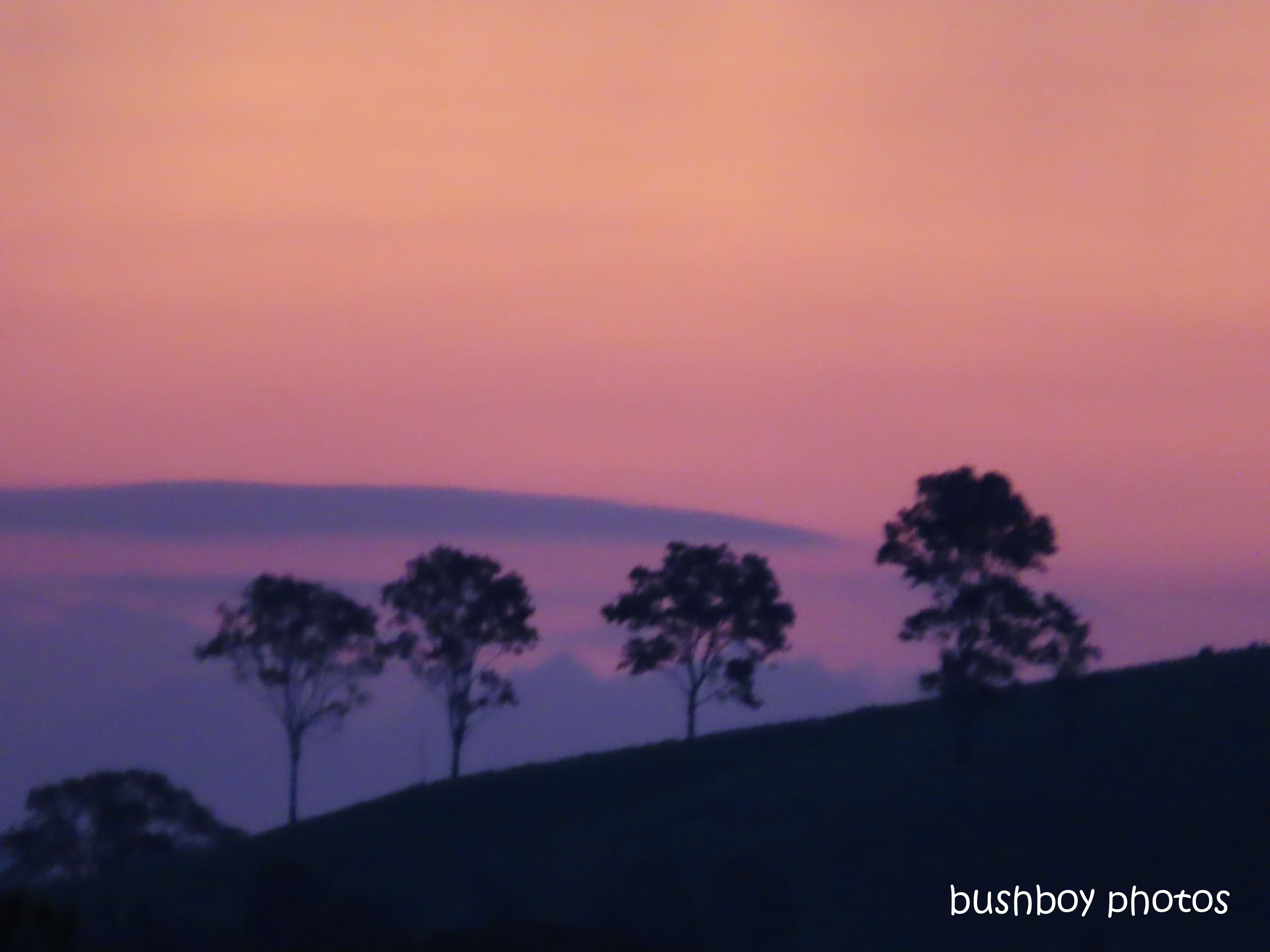 20200201_last on the card_trees_sunset