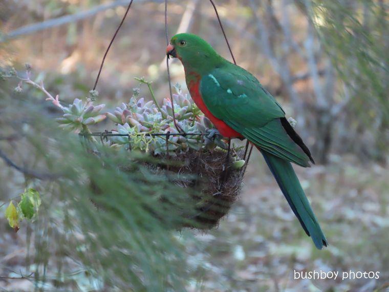 20200206_blog challenge_weekly_prompts_bird_feeder1