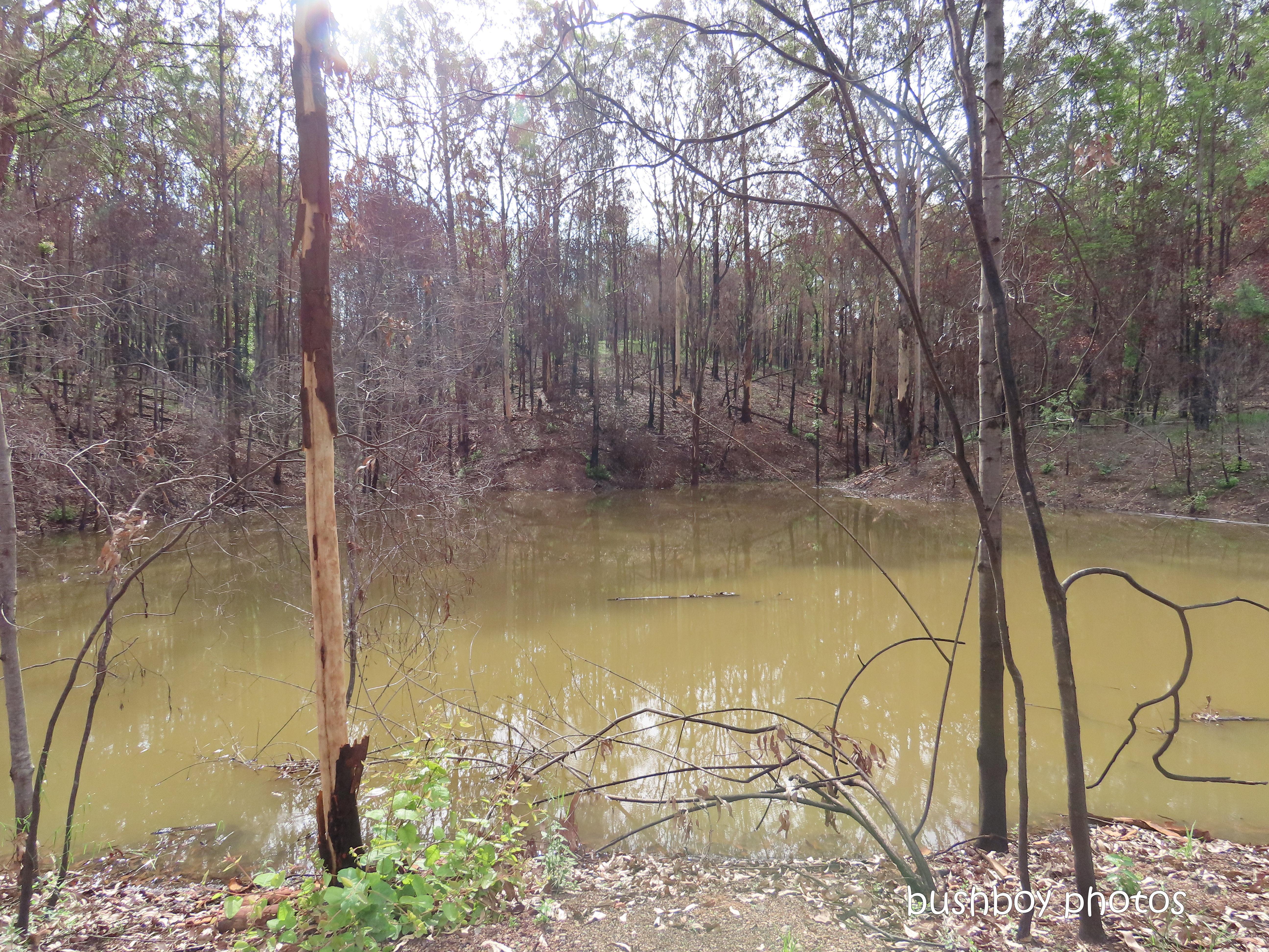 20200211_blog challenge_water water_big dam_full_home