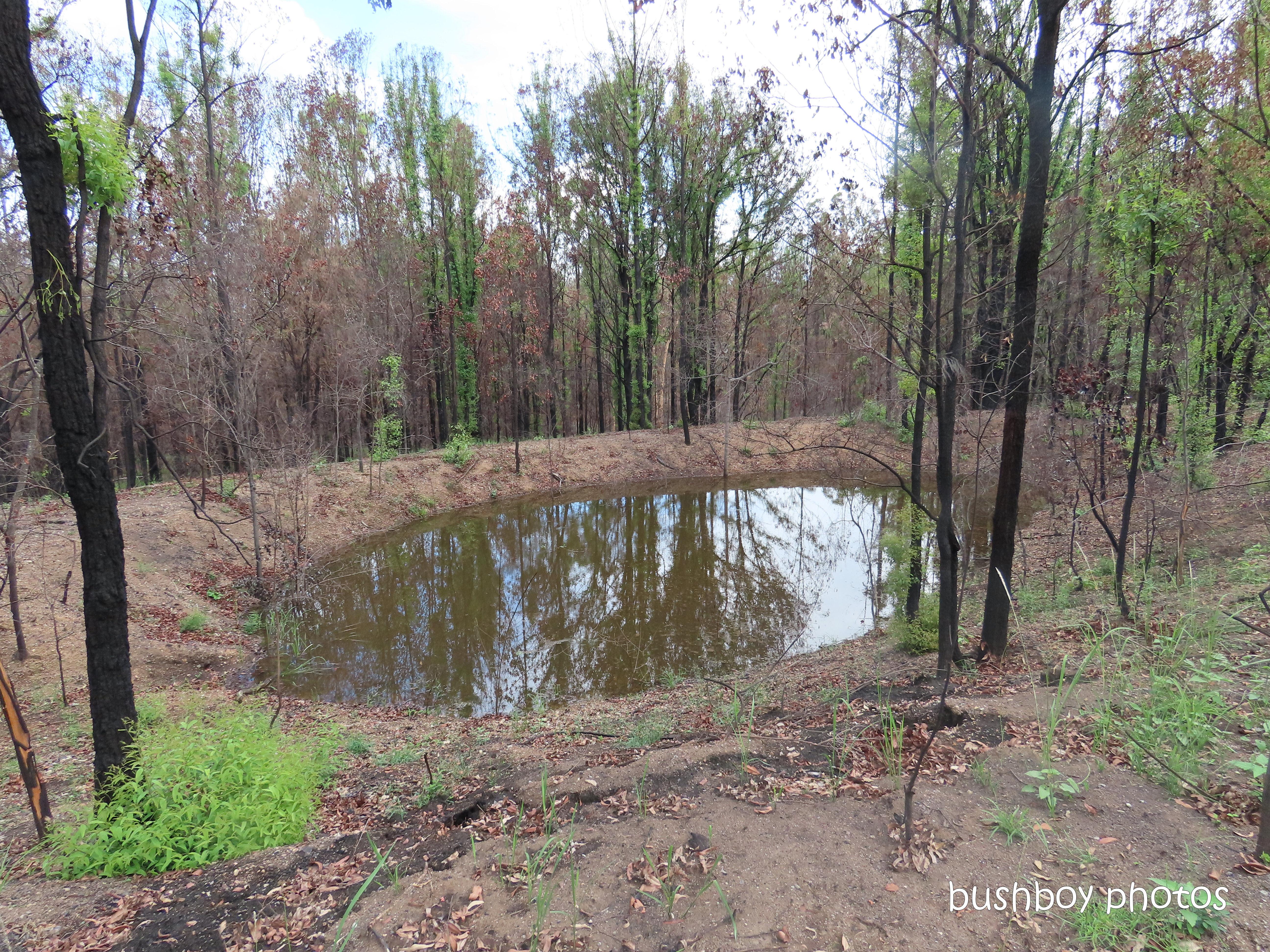 20200211_blog challenge_water water_small dam_wetland_home