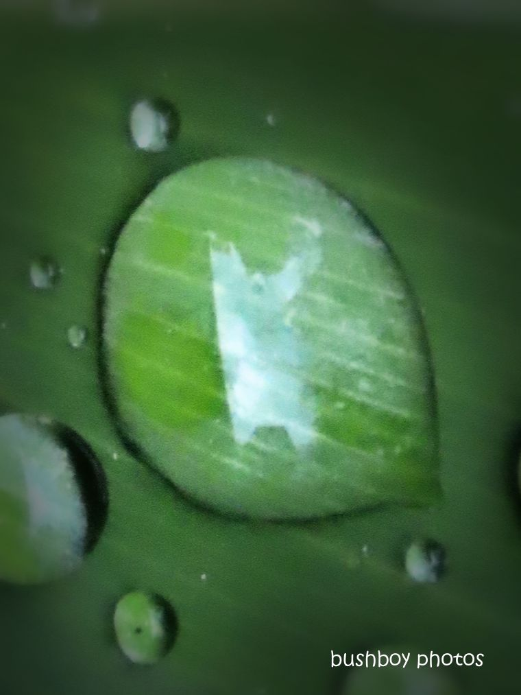 20200306_blog challenge_water drops_leaf3