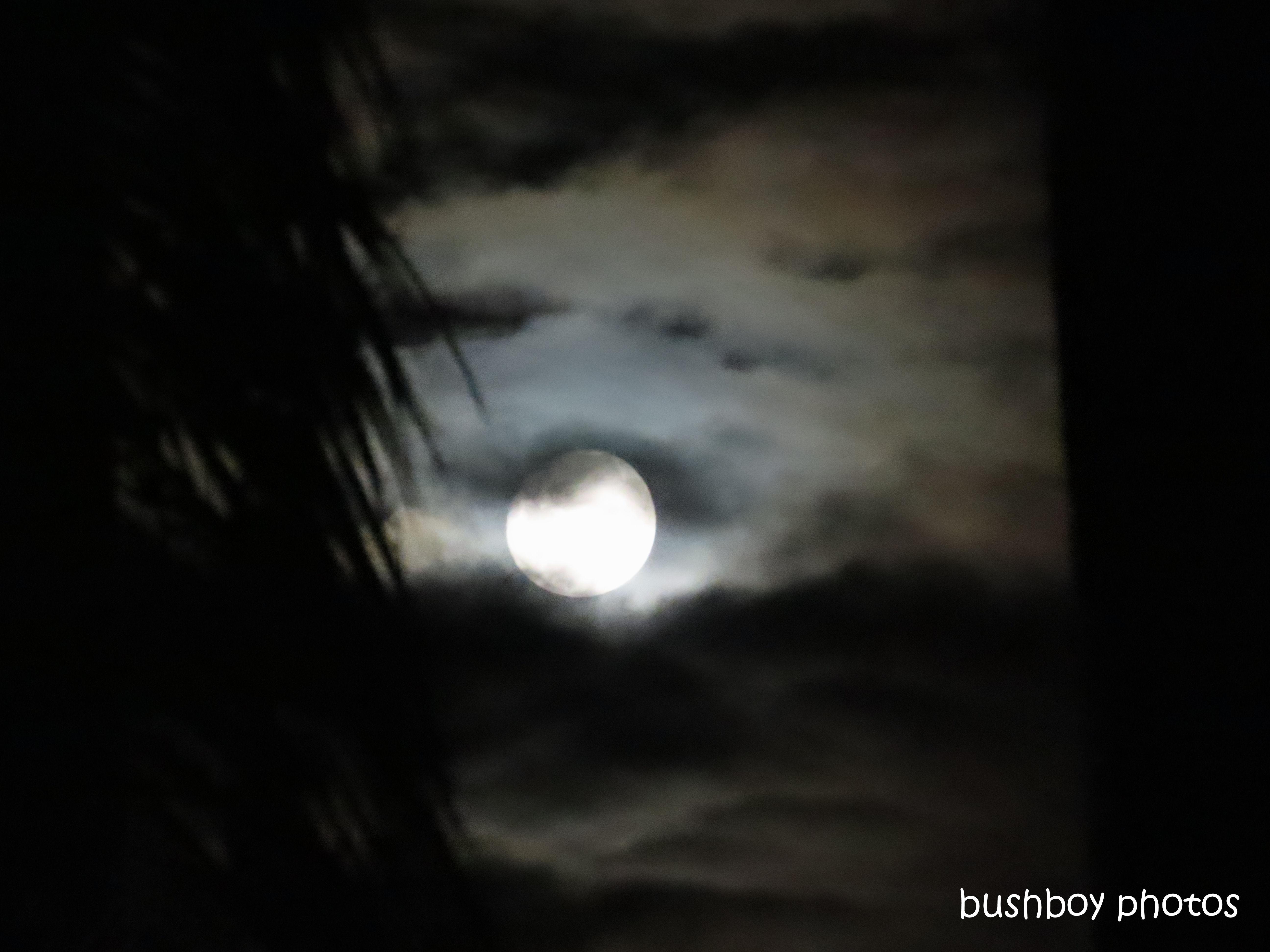 20200312_blog_challenge_moon_caniaba