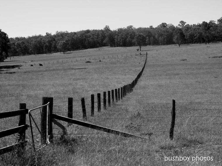 20200320_blog_challenge_blackandwhite_fences_gates_lilydale rd1