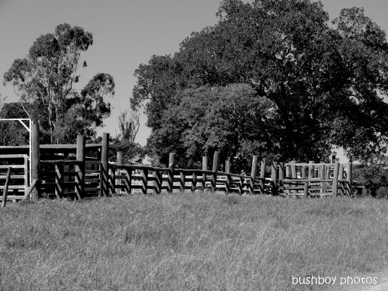 20200320_blog_challenge_blackandwhite_fences_gates_lilydale rd2_yards
