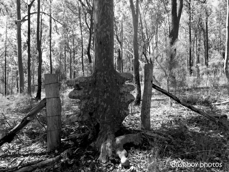 20200320_blog_challenge_blackandwhite_fences_gates_tree_copmanhurst