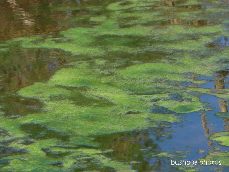 20200322_blog challenge_river_clarence river_carnham_algea_green