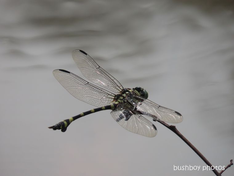 dragonfly_green_dam_named_home_jackadgery_feb 2020