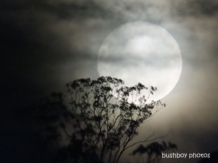 full moon_tree_cloud_named_caniaba_feb 2020
