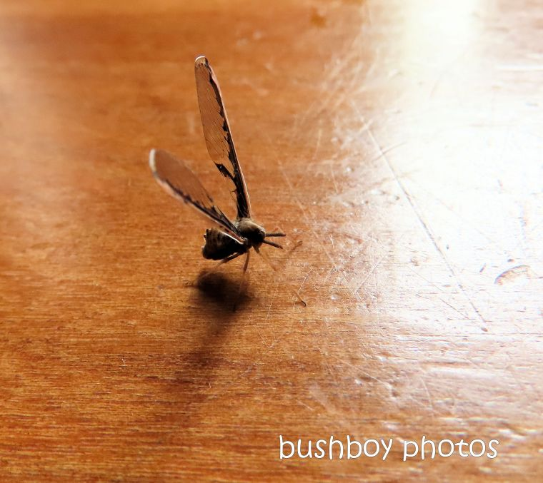 insect_wings_kitchen_named_home_jackadgery_feb 2020